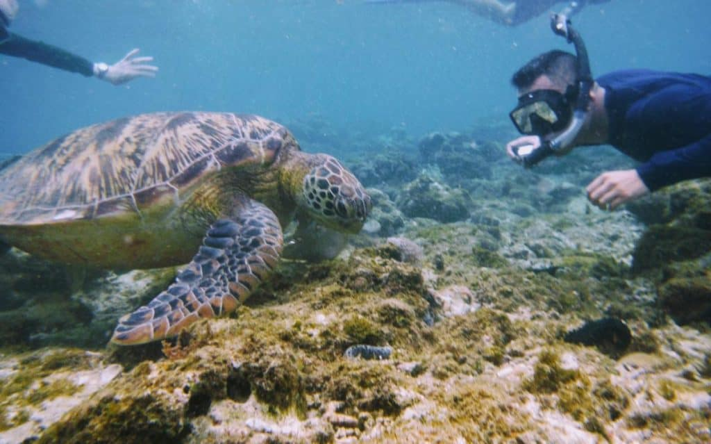 Dive with the sea turtles on Apo Island Philippines