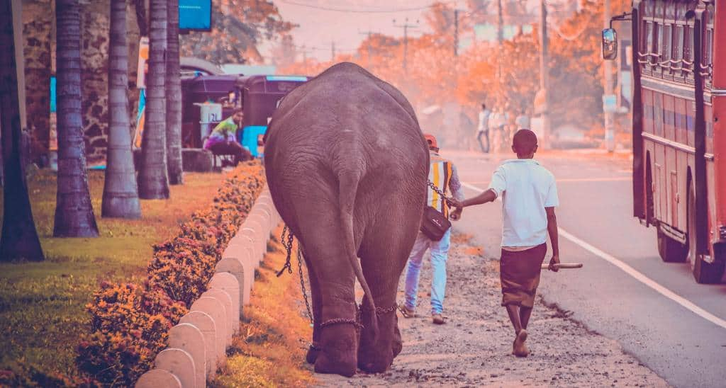 Nomadic FIRE Sri Lanka Elephant Sandra